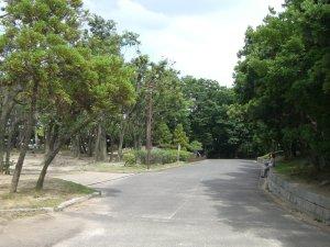 大倉山公園の木の緑