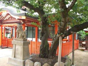 厳島神社(兵庫区)の木