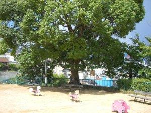 会下山地区シンボル木