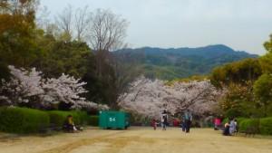 会下山公園の桜 2