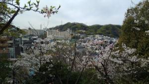 会下山公園の桜 3