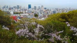 会下山公園の桜 4