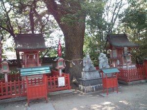 長田神社 何本もの巨木
