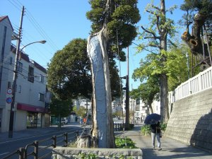 現光寺の前の歩道の木