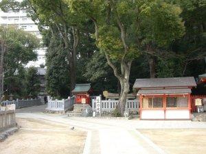 青々した生田の森
