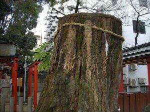生田の森 巨木4(楠の神木)
