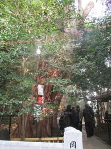 2016年 巨木1 入口から