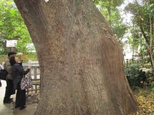 2016年 巨木1 生田の森の中から