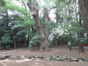 生田の森 再訪 巨木2