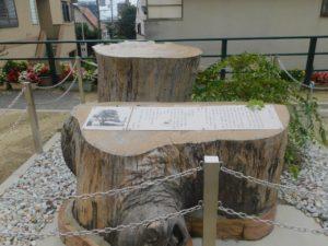 鷺森大欅  記念碑 2