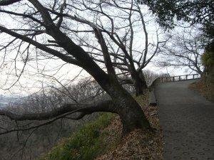 保久良神社へ続く道