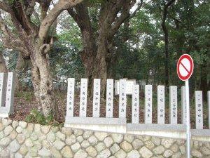 「市民の森」の立て札とヤマモモの巨木