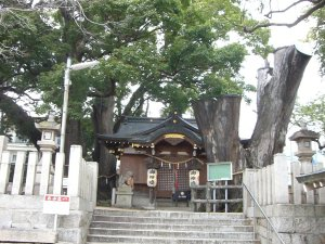 左から「神前の大クス」、「拝殿」、「既に枯れた巨木」