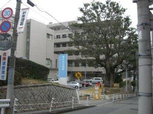 労災病院のクスノキ
