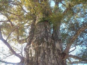 強く逞しい木