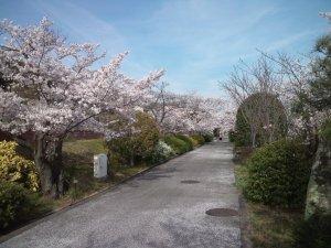 水の科学博物館 桜並木
