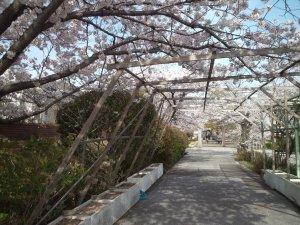 水の科学博物館 桜は最高