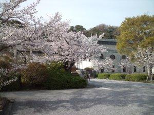 桜の花ごしの水の科学博物館