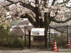 奧平野舞桜の前に来ました