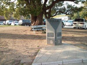 王子公園で巨木を発見
