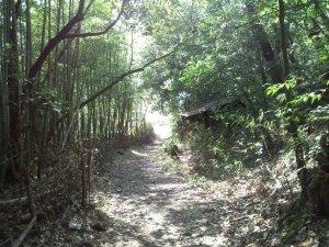 森林浴を楽しむ