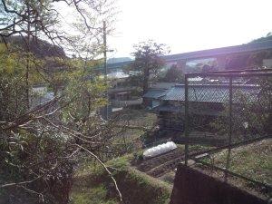 山伏山神社から「白川の石抱きカヤ」を見る