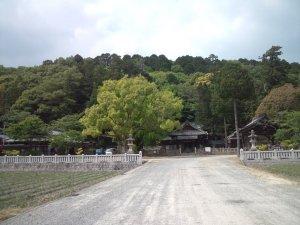 六条八幡神社 拝殿とイチョウの巨木
