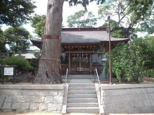 ヒノキの巨木と拝殿