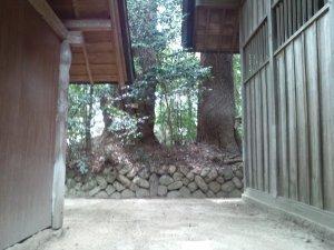 山王神社 巨木3、4