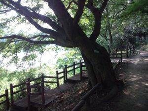 烏原貯水池の周りを歩く