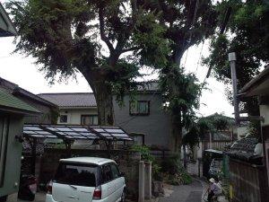 神戸「市民の木」11号
