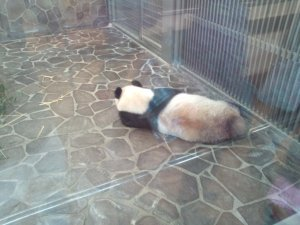 パンダのタンタン