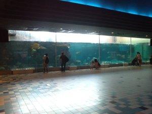 神戸市立須磨海浜水族園 大水槽