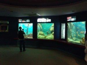 須磨海浜水族園のいくつもの水槽