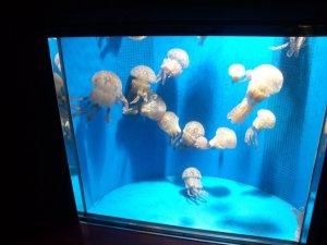 須磨海浜水族園のクラゲ 1