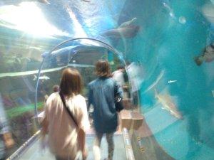 チューブ型水中トンネル