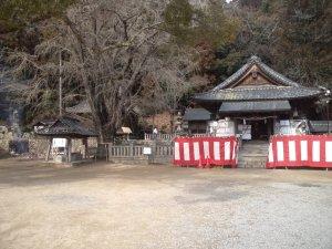 六條八幡神社 拝殿とイチョウの木