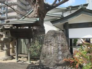 二宮神社 御神木2