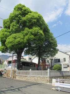 稗田水神社 1