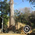 小部大歳神社 引目祭(お的)と杉の巨木を見てきました。