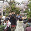 一宮神社 春祭り 2017 「餅まき」と「桜」