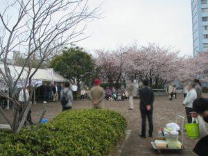 御崎公園桜祭り