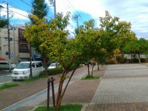 荒田公園横の道の街路樹